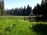 Beautiful meadow.